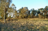 LOT_6_OAKLAND_LANE_INVERELL_04
