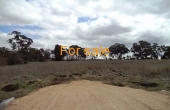 LOT_1_OAKLAND_LANE_INVERELL_03