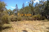 629 WEARNES RD BUNDARRA 010