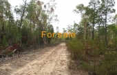 LOT 16 MICHAELS LANE WARIALDA 04