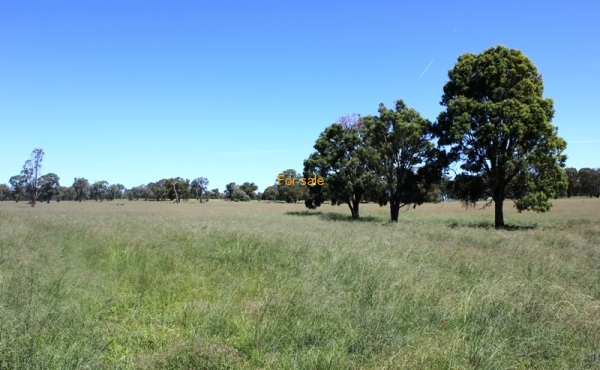 GOWRIE SOUTH INVERELL (30)