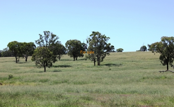 GOWRIE SOUTH INVERELL (32)