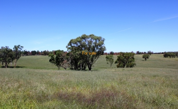 GOWRIE SOUTH INVERELL (39)