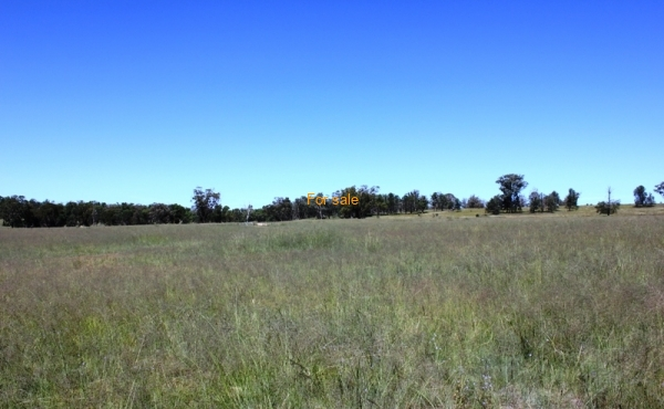 GOWRIE SOUTH INVERELL (7)