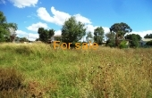 21 ACRE BLOCK INVERELL 010
